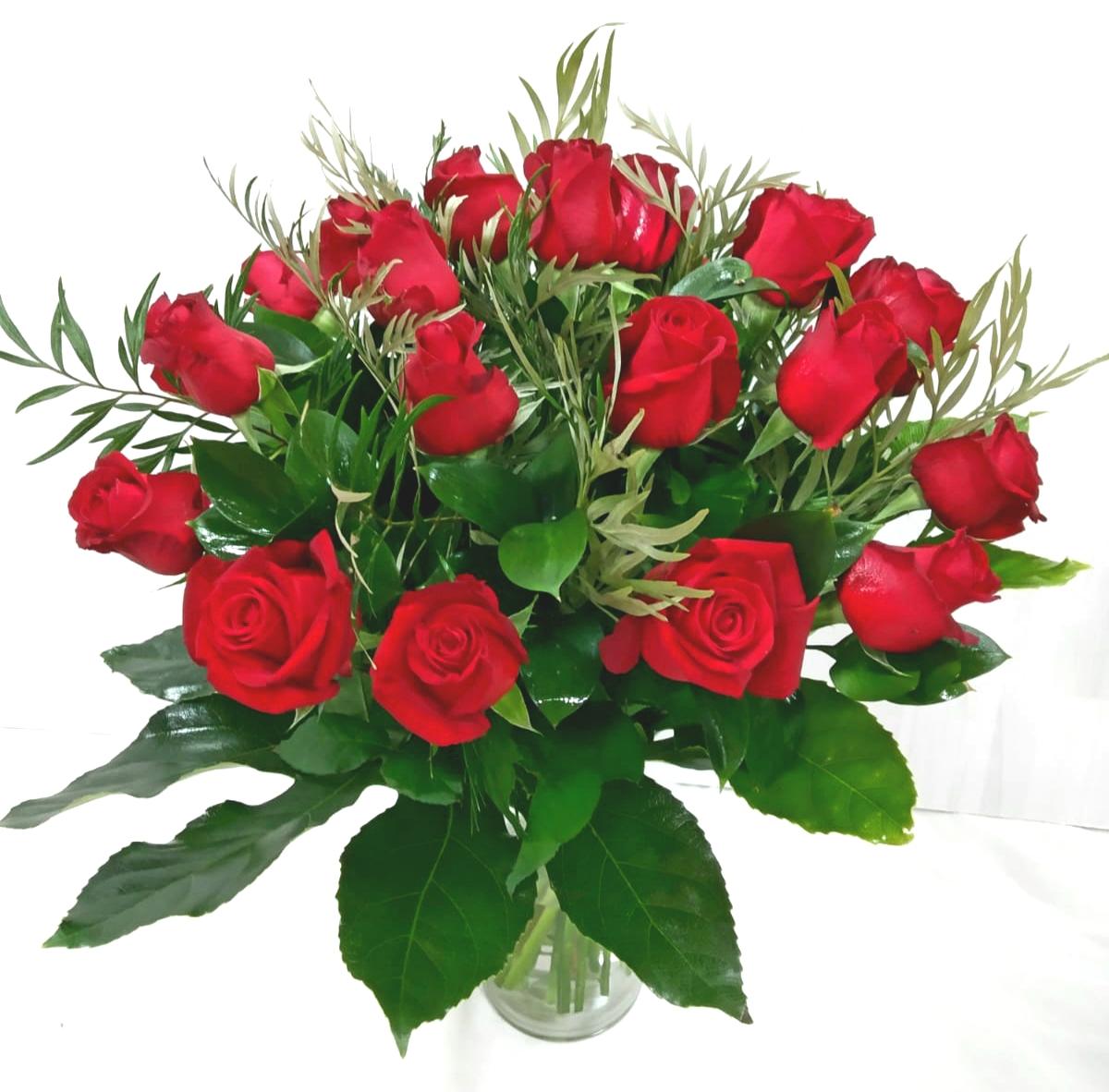 נשיקה אדומה - תלתן פרחים - צפת