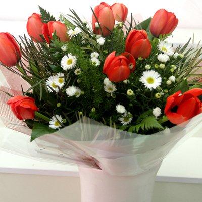 טוליפים - פרחי שובל - בלפור 137 בת ים