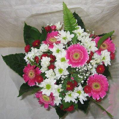 בוקה נמוך - פרחי אודי ודורית - קרית אתא