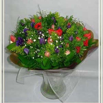 בידר כלניות - פרחי אורית - עכו