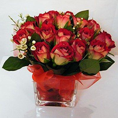ורדים בריבוע 22 - רנה פרחים - מעלה אדומים