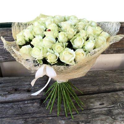 ורד לבן - בוקטו - גדרה