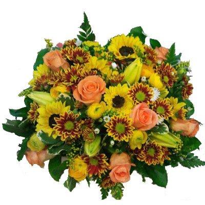 זריחה - דבי פרחים - קרית ביאליק