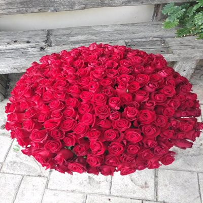 זר ורדים ענק - בוקטו - גדרה