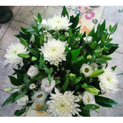 טהור וצח - דבי פרחים - קרית ביאליק