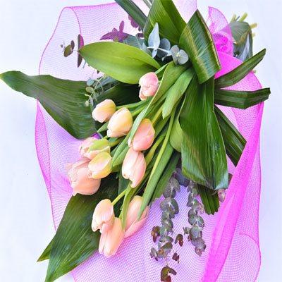 טוליפים באפרסק - פרח בר - עמק חפר