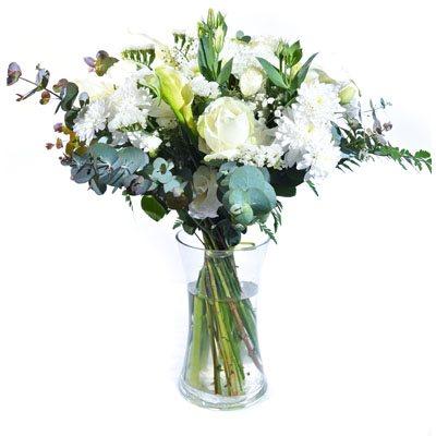 לבן אלגנטי - פרח בר - עמק חפר