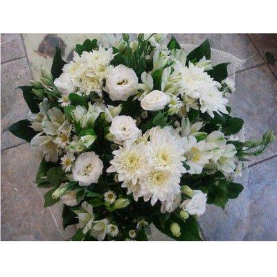 לבן קלאסי - דבי פרחים - קרית ביאליק
