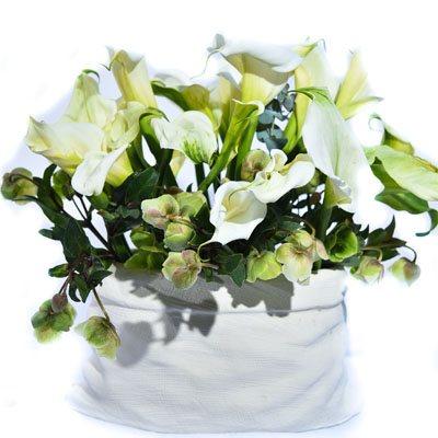 לבן קסום - פרח בר - עמק חפר