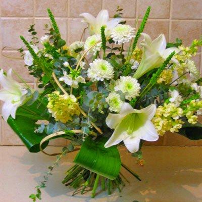 לילות לבנים - פרחי אלונה - טבריה