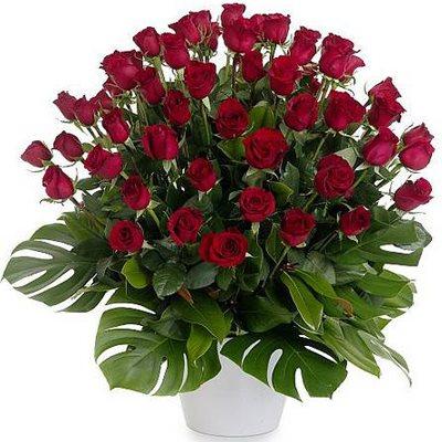 מיוחד לאוהבים - פרחי המשק - כפר הס