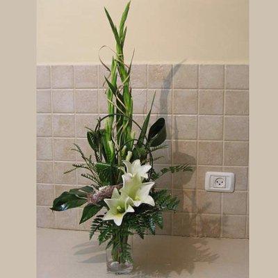 משב של רעננות  - פרחי אלונה - טבריה