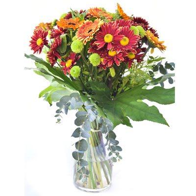 פרחי אהבה - פרח בר - עמק חפר