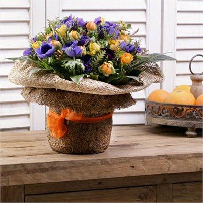פרחי חורף כלניות ונוריות (בעונה) - בר פרחים וכלים - אשקלון