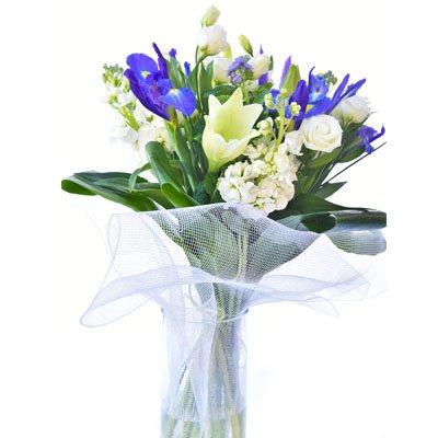 פרחי מלכות - פרח בר - עמק חפר