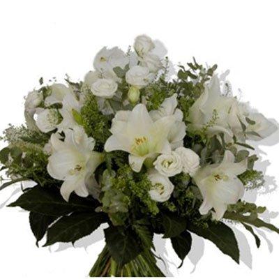 פריחה לבנה  - לב הפרח - מודיעין