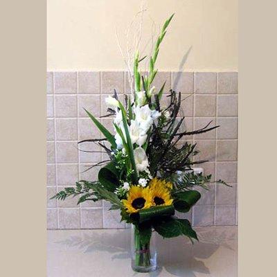 פריחה מחודשת - פרחי אלונה - טבריה