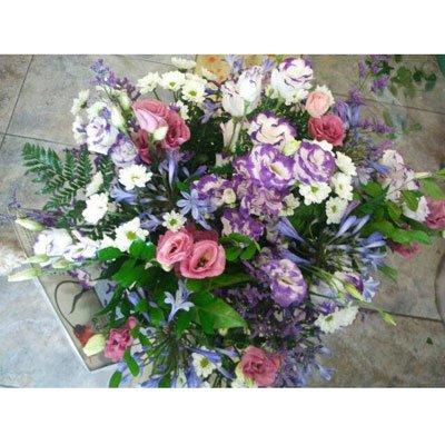 פריחת הליזיאנטוס - דבי פרחים - קרית ביאליק