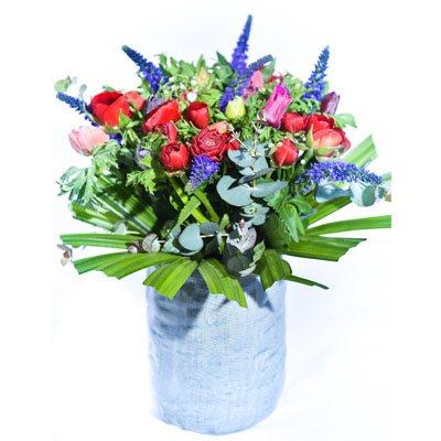 צבעי הקשת - פרח בר - עמק חפר