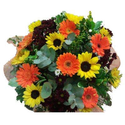קיץ - דבי פרחים - קרית ביאליק