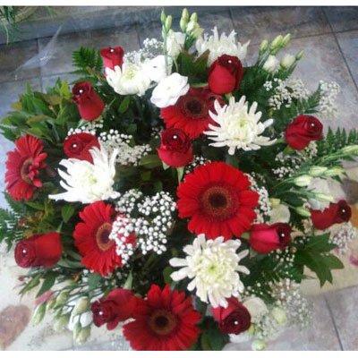 קלאסי אדום-לבן - דבי פרחים - קרית ביאליק