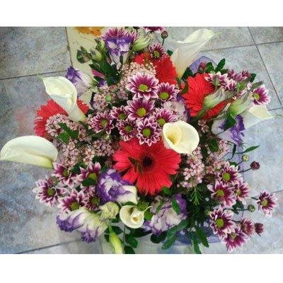 קלות וליזיאנטוסים - דבי פרחים - קרית ביאליק