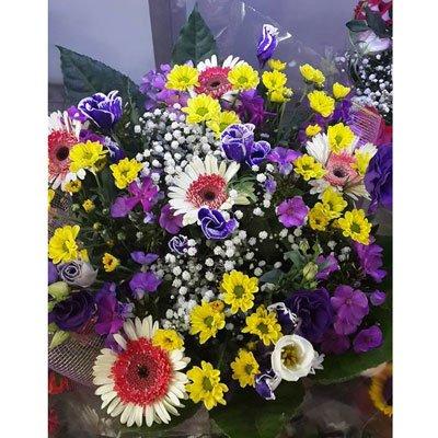 שדה פורח - דבי פרחים - קרית ביאליק