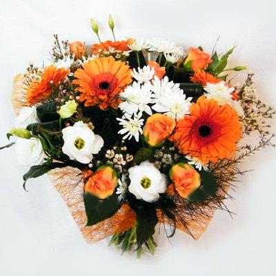 שמש כתומה 28 - רנה פרחים - מעלה אדומים