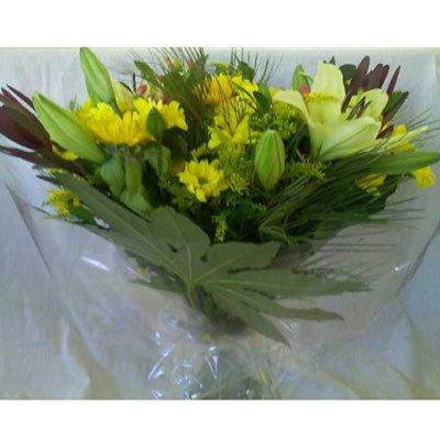 שמש צהובה - פרח וסימפטיה - זכרון יעקב
