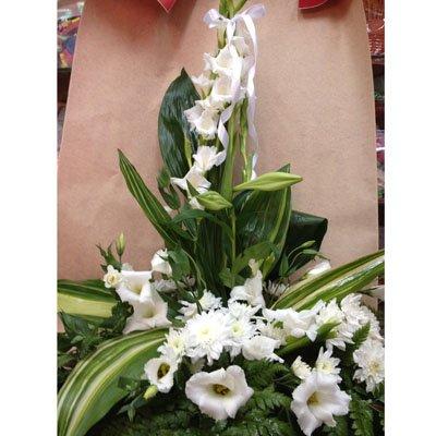 14 - פרחי מזי - נתניה