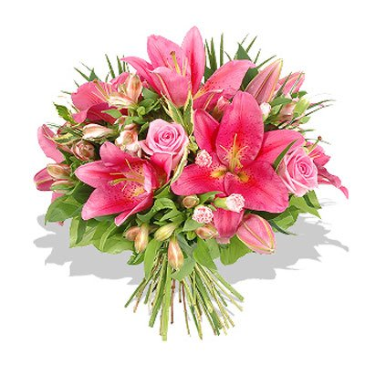 אהבה בורוד - פרחי גילי - רמת גן