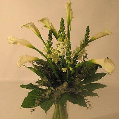 ברבור לבן - פרחים קוליברי - רמת גן
