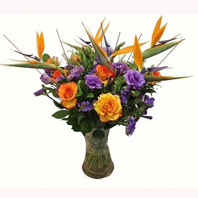 גן עדן - תלתן פרחים - צפת