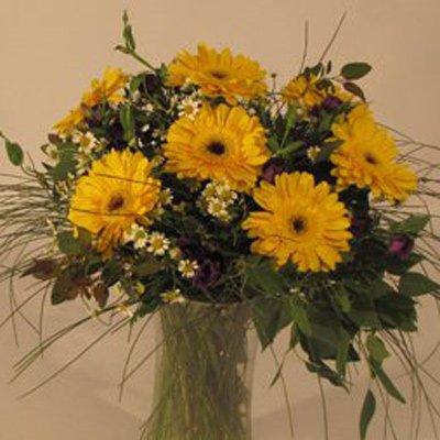גרברות צהובות - פרחים קוליברי - רמת גן
