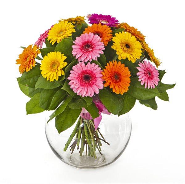 גרברות קלאסי - פרחי עירית - פתח תקווה