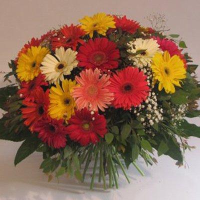גרברות - פרחים קוליברי - רמת גן