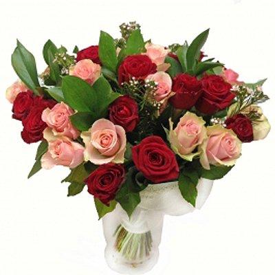 הרמוניה - תלתן פרחים - צפת