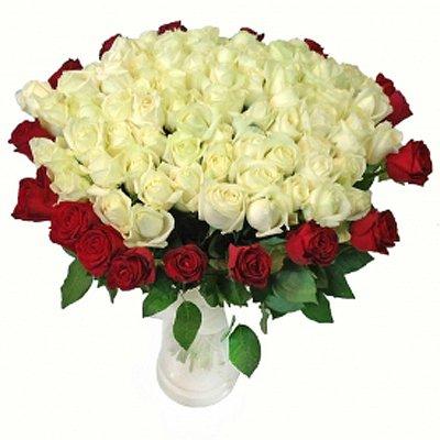 חגיגת ורדים - לפי מס' ורדים - תלתן פרחים - צפת