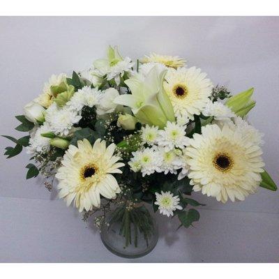 חמד לבן - פרחי חמד - קדומים
