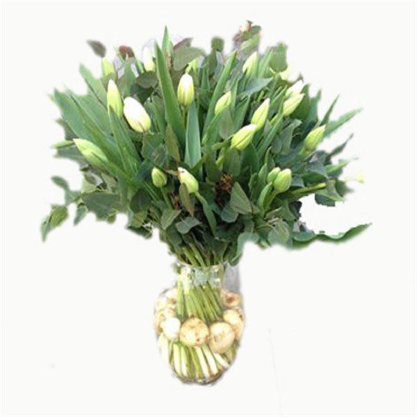 טוליפים לבנים עם בצלים - פרחי דליה - ירושלים