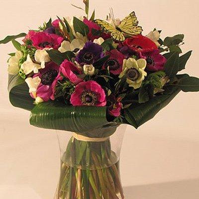 כלניות מחייכות - פרחים קוליברי - רמת גן