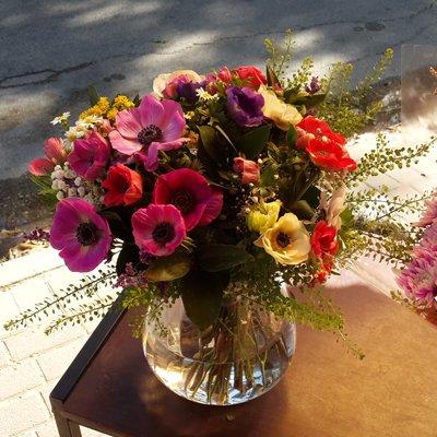 כלניות פרחי חורף - פרחי גולד - רחובות