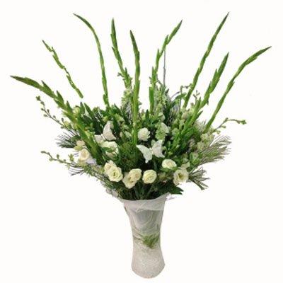 לבן במיוחד - תלתן פרחים - צפת