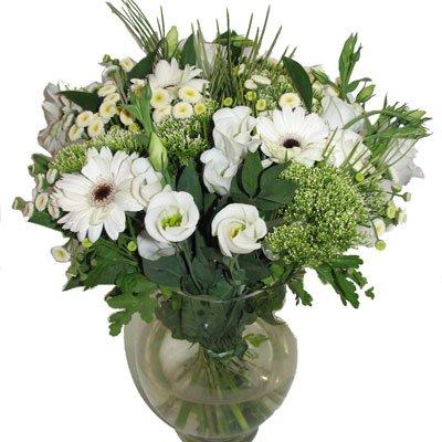 לבן קלאסי - תלתן פרחים - צפת