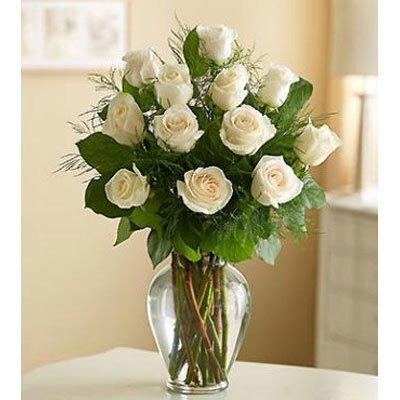 נשיקות - פרחי גילי - רמת גן