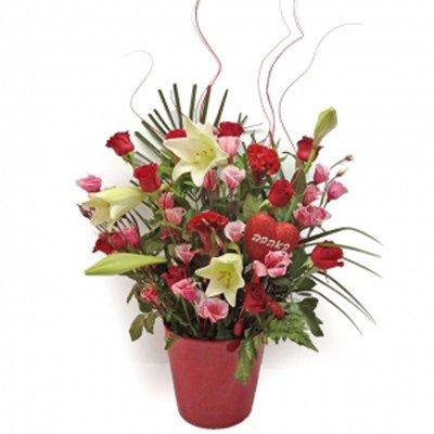 סידור אדום לאוהבים - תלתן פרחים - צפת