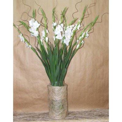 סיפנים - פרחים קוליברי - רמת גן