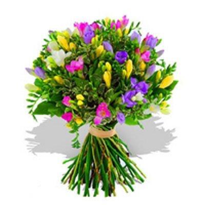 פרזיות מלבלבות - פרחי גילי - רמת גן