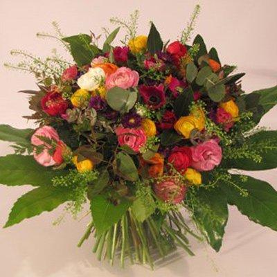 פרחי חורף - פרחים קוליברי - רמת גן