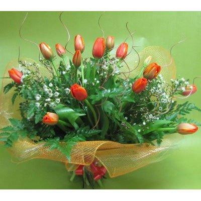 צבעונים אלגנטי - פרחים קוליברי - רמת גן